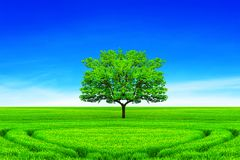 Concept of ecology. Green earth.  royalty free stock photos