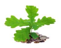 Concept een jonge eiken-boom en muntstukken Royalty-vrije Stock Foto's