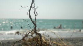 The concept of an environmental campaign. close-up. a snag that the sea threw ashore during a storm. in the background stock footage