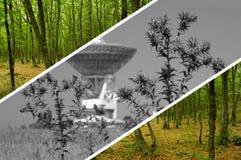 Concept environnemental Images stock