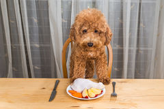 Concept of excited dog having delicious raw meat meal on table. Royalty Free Stock Photography