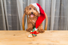 Concept of excited dog on Santa hat with Christmas gift  on tabl Royalty Free Stock Images