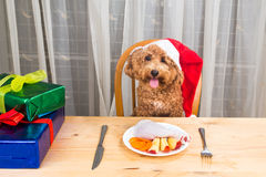 Concept of excited dog on Santa hat having delicious raw meat Ch. Ristmas meal on table stock images