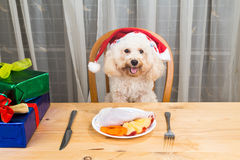 Concept of excited dog on Santa hat having delicious raw meat Ch. Ristmas meal on table stock photo