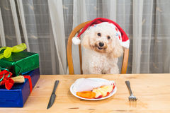 Concept of excited dog on Santa hat having delicious raw meat Ch. Ristmas meal on table royalty free stock image