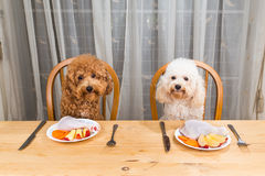 Concept of excited dogs having delicious raw meat meal on table. Royalty Free Stock Image