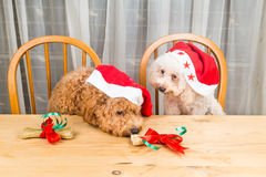 Concept of excited dogs on Santa hat with Christmas gift on tabl Stock Photo