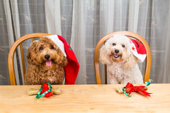 Concept of excited dogs on Santa hat with Christmas gift on tabl Royalty Free Stock Photos