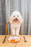 Concept of exciting dog having delicious raw meat meal on table. Royalty Free Stock Image