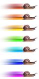 Concept. fast snail with colored silhouette. Stock Image