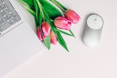 Concept of feminine workspace with white laptop, mouse and bright pink tulip flowers on white table. Copy space. stock photo