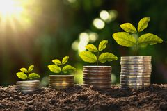 Concept finance and accounting growing. young plant on coins. With sunrise stock photo