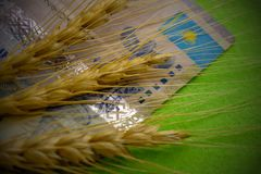 The concept of financial costs for agriculture in Kazakhstan, the price of wheat. Close-up of three spikelets lying on Kazakh stock photography
