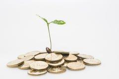 The concept of financial plan Stock Photos