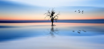 Concept fine art image of tree and birds in still waters Royalty Free Stock Images