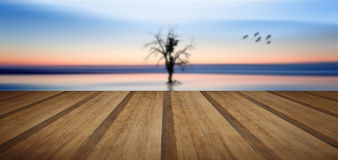Concept fine art image of tree and birds in still waters with wo. Conceptual fine art image of tree and birds in still waters with wooden planks floor Stock Photography