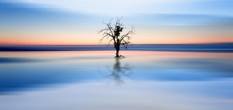 Concept fine art image of tree reflected in still waters Royalty Free Stock Images