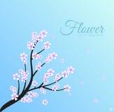 Concept floral de fond de branche Vecteur Image stock