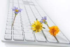 Concept of flowers growing from computer Royalty Free Stock Images