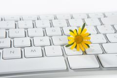 Concept of flowers growing from computer Stock Photo