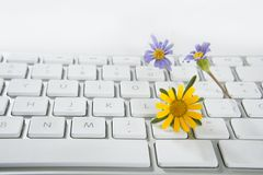 Concept of flowers growing from computer Royalty Free Stock Photo