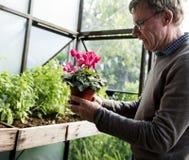 Concept frais de jardinage de fleur supérieure Photos libres de droits