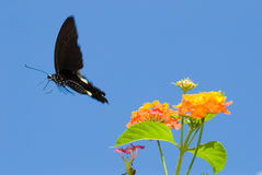Concept of freedom. butterfly free flying Stock Photo