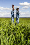 concept of freedom and joy, man with jeans lying in wheat field, happy stock photography