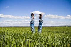 Concept of freedom and joy, man with jeans lying in wheat field, Royalty Free Stock Image
