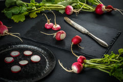 Concept of fresh radishes Royalty Free Stock Photos
