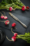 Concept of fresh radishes Royalty Free Stock Image
