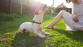 Concept of friendship and pets. Happy young woman and dog having fun at grass stock video footage