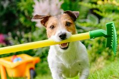 Concept of fun horticulture with dog and rake at colorful garden stock photography