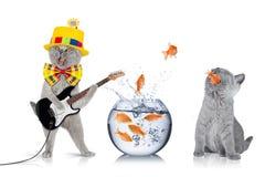 Concept futé d'équipe de chat photographie stock libre de droits