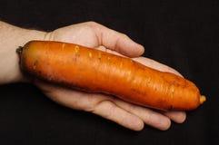 Concept génétiquement modifié de GMO d'organisme : carotte géante sur la paume humaine Photographie stock