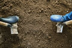 Concept of a garden work. Male and female feet in rubber shoes digging ground with shovels in the earth. View from above Royalty Free Stock Image
