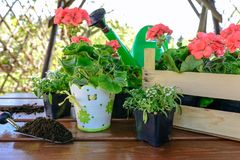 Planting flowers in the garden. Concept of garden work - planting flowers in a garden gazebo royalty free stock photo