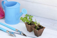 Concept of gardening Stock Images