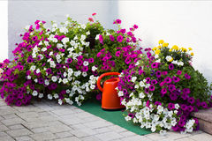 Concept of gardening and hobby. Royalty Free Stock Photography