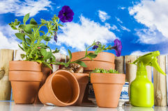 Concept of gardening, nature theme Royalty Free Stock Photo