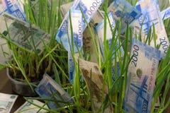 Concept geldboom het groeien van geld stock fotografie