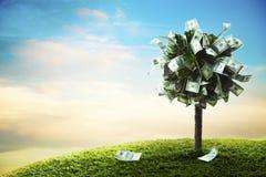 Concept, geldboom op gras Royalty-vrije Stock Afbeeldingen