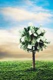 Concept, geldboom op gras Royalty-vrije Stock Afbeelding