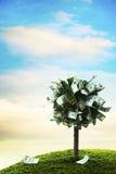 Concept, geldboom op gras Stock Afbeeldingen