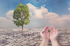 Concept of Global warming,Farmer hands holding seeding. With cracked land background Royalty Free Stock Images
