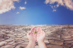 Concept of Global warming. Farmer hands holding seeding with cracked land background Stock Image