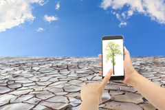 Concept of Global warming. Hand holding smartphone with tree image on cracked land background Stock Images
