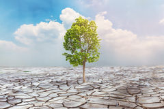 Concept of Global warming. Tree grown on cracked land Stock Images