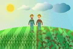 Harvest of maize - two farmers in a corn field. The concept of good and bad harvest. Sun and rain, weather conditions. Unsuccessful year Royalty Free Stock Image