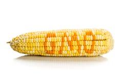 Concept graanmaïs met GMO op de pitten van graanzaden royalty-vrije stock foto